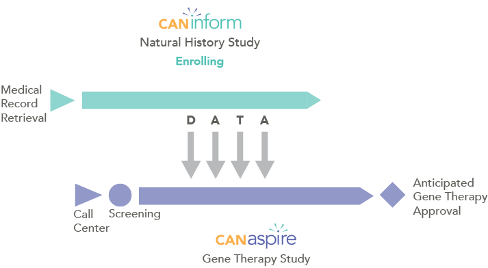 Graphic showing relationship between Caninform natural history study and Canaspire gene therapy study